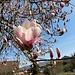 ... und malerisch blühenden Bäumen in Hägendorf