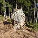 Sieht aus wie Granit, ist aber ein Baumstumpf