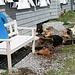 glückliche Hühner vor der Glecksteinhütte