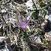 Kaum aus dem Wald, trifft man die ersten Lichtblumen an