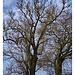 Übergang unter Bäumen 2