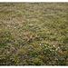 meadows w/o flushing