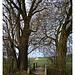 Übergang unter Bäumen 3