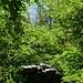 Üppiger Wald umgibt die Ruinen von Le Casci (661 m). Durch das Blätterdach kann man den Sacro Monte Calvario erspähen.