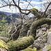Rustikal das Ambiente, gut gestuft der Stein: ich freue mich, später im Jahr hier komplett hochkraxeln zu dürfen. Netterweise ist er mal nicht von dem umliegenden Bäumen komplett zugewachsen ...