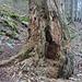 Ruinen im Bannwald