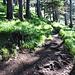 Auf etwa 1200 m ü. M. verengt sich der Weg zu einem Pfad.