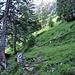 Ab hier wird's blauweiss. Ende des Föhrenwaldes.