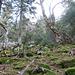 Schotterhalden und Wildnis