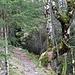 Im Wald unterwegs, bleiben Fotosujets im Nahbereich