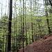 Auch die Laubwälder beginnen zu grünen