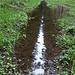 gespiegelter Himmelssteifen in Wasserrinne auf Waldabfuhrweg