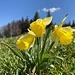 ungern lassen wir diese exzellenten Blumen zurück ...