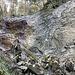 diese Felswand (am vorläufigen Schluchtabschluss) muss nicht überwunden werden ...