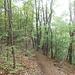 Nel Parco della Valle del Boia, da Besnate a Jerago, un tratto di sentiero dalla parvenza montanara.