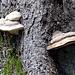 noch ein wenig Pilze