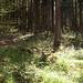 lauschige, halb zugewucherte Waldwege am Südrand des Rieds