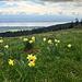 Aussicht auf den Lac de Neuchâtel<br />