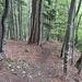 Von Matteli setzt sich der Waldabstieg nach Spig fort