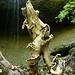 Pittoreske Wurzel unterhalb der Wasserfallstufe.<br />Beim wiederholten Hingucken entdecke ich erst so diverse fantastische Formen und Wesen