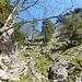 Rückblick auf den gesicherten Steig zum Kofel