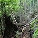 Eine wilde Schlucht die der Moosbach in der Unteren Wasserstube zu bieten hat. Der Bach und ein Wasserfall ist nur bei genauem Hinsehen zu erkennen.