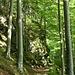 Schöner Wanderweg oberhalb des Riesbaches, der heute und vermutlich auch sonst nicht viel bewandert wird.