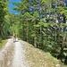 Strada Larice - Ciani