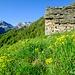 Alpe Oriaccia