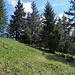 Gipfel Gschwändstock: keine Aussicht