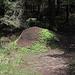 Ein riesiger und mit frischem Grün teilweise überwachsener Ameisenhaufen