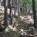 Aufstieg auf dem Umgehungspfad neben dem Strackfelsen, um auf dessen oberen Teil zu gelangen. So schmutzig, wie es hier auf dem Waldboden ist, so schmutzig ist es oft auch auf den im Wald liegenden Pfälzer Felsen, was das Klettern dort erschwert.