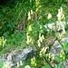 Valle di Bri - Blumen oberhalb Pozzolo