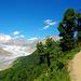 Komische Bäume am Moränenweg. Der [http://www.hikr.org/tour/post26526.html Gratweg] vom Eggishorn zum Bettmerhorn (ohne Klettersteig) steht irgendwann noch auf dem Programm