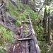 Diese Treppe hat auch schon Tobi beunruhigt!