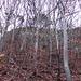 Vor lauter Bäumen sieht man den Wald nicht mehr.