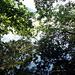 dichtes Gebüsch