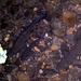 Fische in der Reppisch