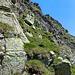 Die steile Gras/Fels Flanke im Abstieg zum Sattel
