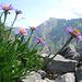 Alpen-Aster Bouquet