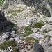 Die Steilheit kommt nicht ganz rüber<br />Etwa ab dem ersten Drittel der Gipelwand folge ich der großen seichten, sich aufsteilenden Verschneidungsrinne. Einige Stufen erfodern einen soliden 2ten Grad Kletterei.