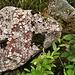 Giunti ormai nei pressi del Lago Nambino, mentre ormai abbiamo quasi giunti il giro ad anello dei 5 laghi, ci imbattiamo in questa splendida roccia colorati che assomiglia quasi ad un fossile. Di che si tratta?