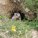 Murmeltiere gibts auch zu sehen...
