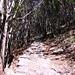 Der Saumpfad von Bracchio (310 m) nach Vercio (828 m) ist ein Meisterwerk und es ist eine Freude, dort hinaufzuwandern.
