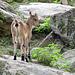 Im Tierpark Aletsch.