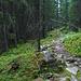 Beim Abstieg im Wald auf ca. 1000m Höhe. Nachdem ich den Hauptweg verlassen hatte, war ich wieder völlig allein.