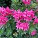 ... und hübsche Blumengruppe ...