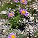 erfreuliche Blumenpracht ...