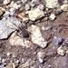 Spinne am vegetationslosen Gipfel.Wovon die sich wohl ernährt??