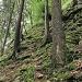 gangbarer Wildwechsel. leider ist der Fels weiter oben extrem bröckelig und hat (für mich) nicht genügend Wurzelgriffe